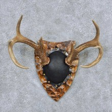 Whitetail Deer Antler Plaque Taxidermy Mount #13848 For Sale @ The Taxidermy Store