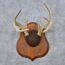 Whitetail Deer Antler Plaque Mount For Sale #14765 @ The Taxidermy Store