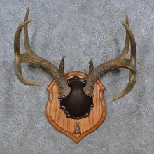 Whitetail Deer Antler Plaque For Sale #15235 @ The Taxidermy Store