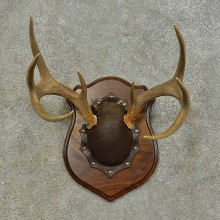 Whitetail Deer Antler Plaque Mount For Sale #16470 @ The Taxidermy Store