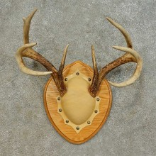 Whitetail Deer Antler Plaque Mount For Sale #16475 @ The Taxidermy Store