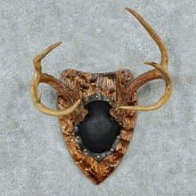 Whitetail Deer Antler Plaque Mount #13772 For Sale @ The Taxidermy Store