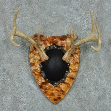 Whitetail Deer Antler Plaque Mount #13777 For Sale @ The Taxidermy Store