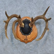 Whitetail Deer Antler Plaque Mount For Sale #15339 @ The Taxidermy Store