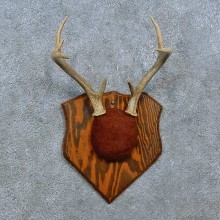 Whitetail Deer Antler Plaque Mount For Sale #15385 @ The Taxidermy Store