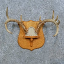 Whitetail Deer Antler Plaque Mount For Sale #15389 @ The Taxidermy Store
