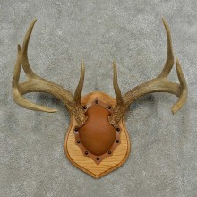 Whitetail Deer Antler Plaque Mount For Sale #16881 @ The Taxidermy Store