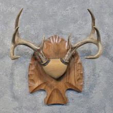 Whitetail Deer Antler Plaque #12174 For Sale @ The Taxidermy Store