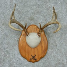 Whitetail-Deer-Antlers-Plaque-Taxidermy-Mount #13339 For Sale @ The Taxidermy Store