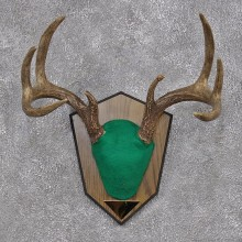 Whitetail Deer Taxidermy Antler Plaque Mount #12426 For Sale @ The Taxidermy Store