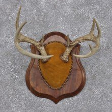 Whitetail Deer Taxidermy Antler Plaque Mount #12430 For Sale @ The Taxidermy Store