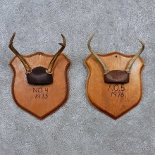 Whitetail Antler Plaque Mounts For Sale #15671 @ The Taxidermy Store