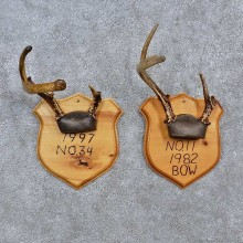 Whitetail Antler Plaque Mounts For Sale #15672 @ The Taxidermy Store