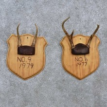 Whitetail Antler Plaque Mounts For Sale #15673 @ The Taxidermy Store
