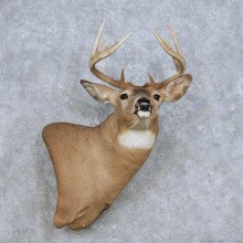 Whitetail Deer Taxidermy Wall Pedestal Mount For Sale