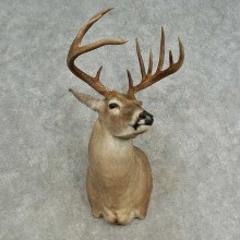Whitetail Deer Shoulder Mount For Sale #16663 @ The Taxidermy Store
