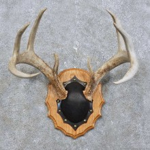 Whitetail Deer Antler Plaque Mount For Sale #15775 @ The Taxidermy Store