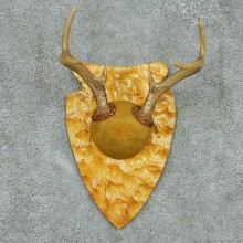 Whitetail Deer Antler Plaque Mount #13685 For Sale @ The Taxidermy Store