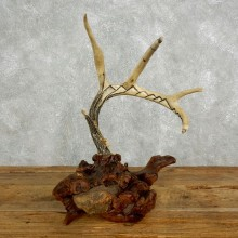 Whitetail Deer Antler Necklace Holder For Sale #17623 @ The Taxidermy Store