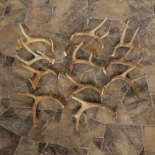 Whitetail Deer Antler Craft Pack For Sale #21335 @ The Taxidermy Store