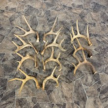 Whitetail Deer Antler Craft Pack For Sale #23042 @ The Taxidermy Store