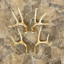 Whitetail Deer Antler Craft Pack For Sale #25107 @ The Taxidermy Store