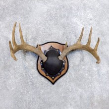 Whitetail Deer Antler Plaque Mount For Sale #18715 @ The Taxidermy Store