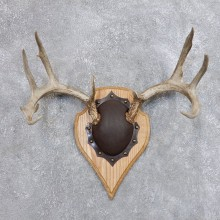 Whitetail Deer Antler Plaque Mount For Sale #18725 @ The Taxidermy Store