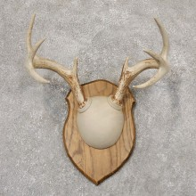 Whitetail Deer Antler Plaque Mount For Sale #18964 @ The Taxidermy Store