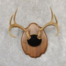 Whitetail Deer Antler Plaque Mount For Sale #19022 @ The Taxidermy Store