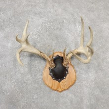 Whitetail Deer Antler Plaque Mount For Sale #19116 @ The Taxidermy Store