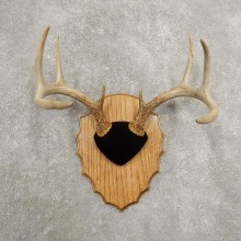 Whitetail Deer Antler Plaque Mount For Sale #20985 @ The Taxidermy Store