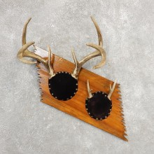 Whitetail Deer Antler Plaque Mount For Sale #21145 @ The Taxidermy Store