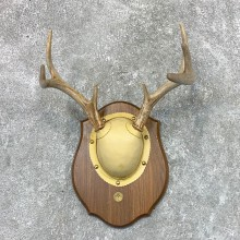 Whitetail Deer Antler Plaque Mount For Sale #22665 @ The Taxidermy Store