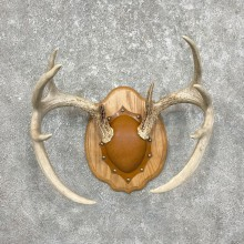 Whitetail Deer Antler Plaque Mount For Sale #25334 @ The Taxidermy Store