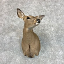 Whitetail Deer Doe Shoulder Mount For Sale #22803 @ The Taxidermy Store