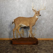 Whitetail Deer Life-Size Mount For Sale #19347 @ The Taxidermy Store