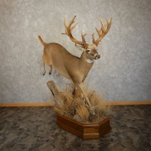 Whitetail Deer Life Size Taxidermy Mount #21594 For Sale @ The Taxidermy Store