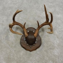 Whitetail Deer Antler Plaque Mount For Sale #17307  @ The Taxidermy Store