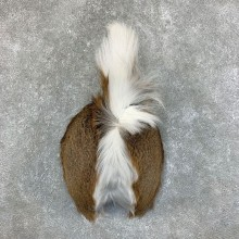 Whitetail Deer Rump Mount For Sale #22724 @ The Taxidermy Store