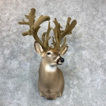 Whitetail Deer Shoulder Mount #23398 For Sale - The Taxidermy Store