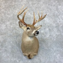 Whitetail Deer Shoulder Mount #23883 For Sale @ The Taxidermy Store