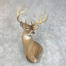 Whitetail Deer Shoulder Mount #23985 For Sale - The Taxidermy Store