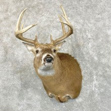 Whitetail Deer Shoulder Mount #24515 For Sale - The Taxidermy Store