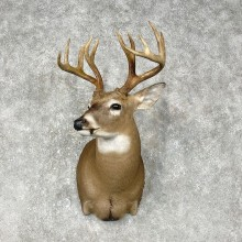Whitetail Deer Shoulder Mount #25398 For Sale - The Taxidermy Store