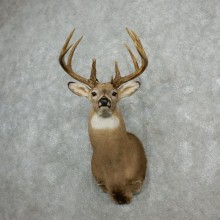 Whitetail Deer Shoulder Mount For Sale #18100 @ The Taxidermy Store