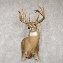 Whitetail Deer Shoulder Taxidermy Mount For Sale #18765 @ The Taxidermy Store
