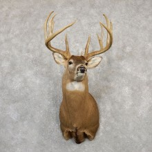Whitetail Deer Shoulder Mount For Sale #19995 @ The Taxidermy Store