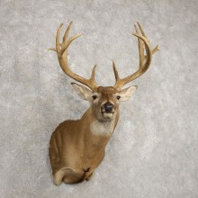 Whitetail Deer Shoulder Mount For Sale #20480 @ The Taxidermy Store