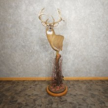 Whitetail Deer Shoulder Mount For Sale #21011 @ The Taxidermy Store